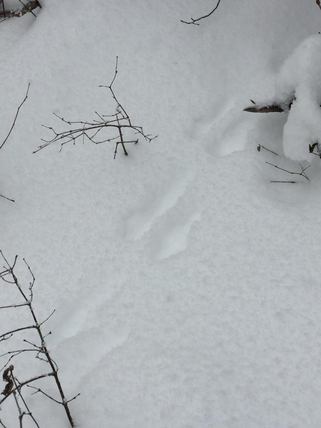 wintertracks